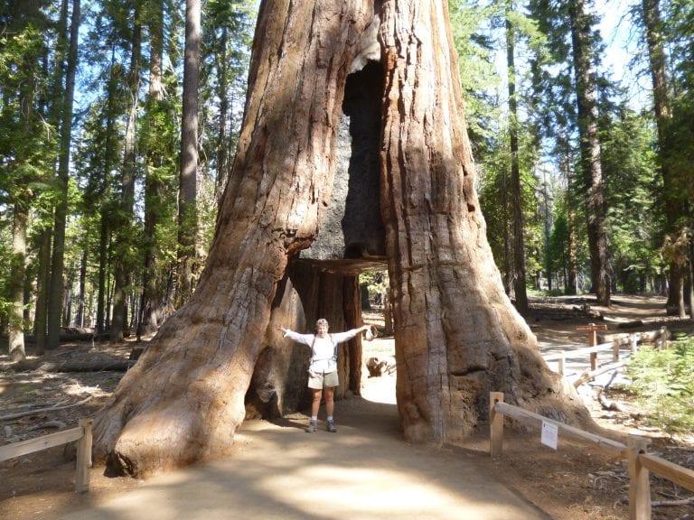 Tunnel-Tree-Mariposa-Grove-Linda-Ballou-768x576